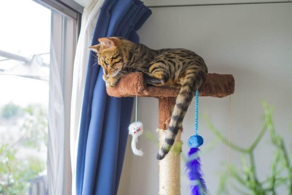 猫 網戸 選び方