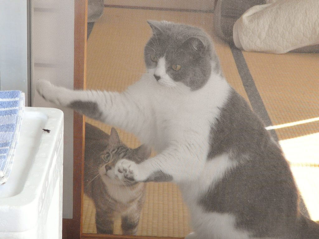 猫用 網戸 選び方