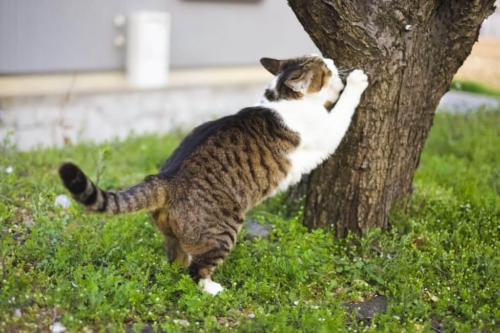 猫 網戸 爪研ぎ