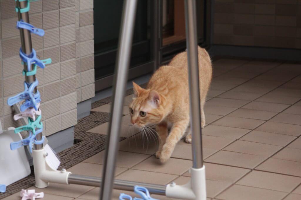 猫 脱走 理由