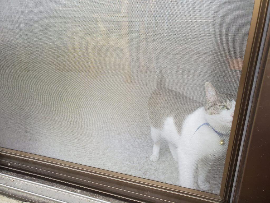 猫 脱走 ケース