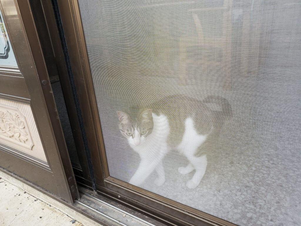 猫マール32 特徴