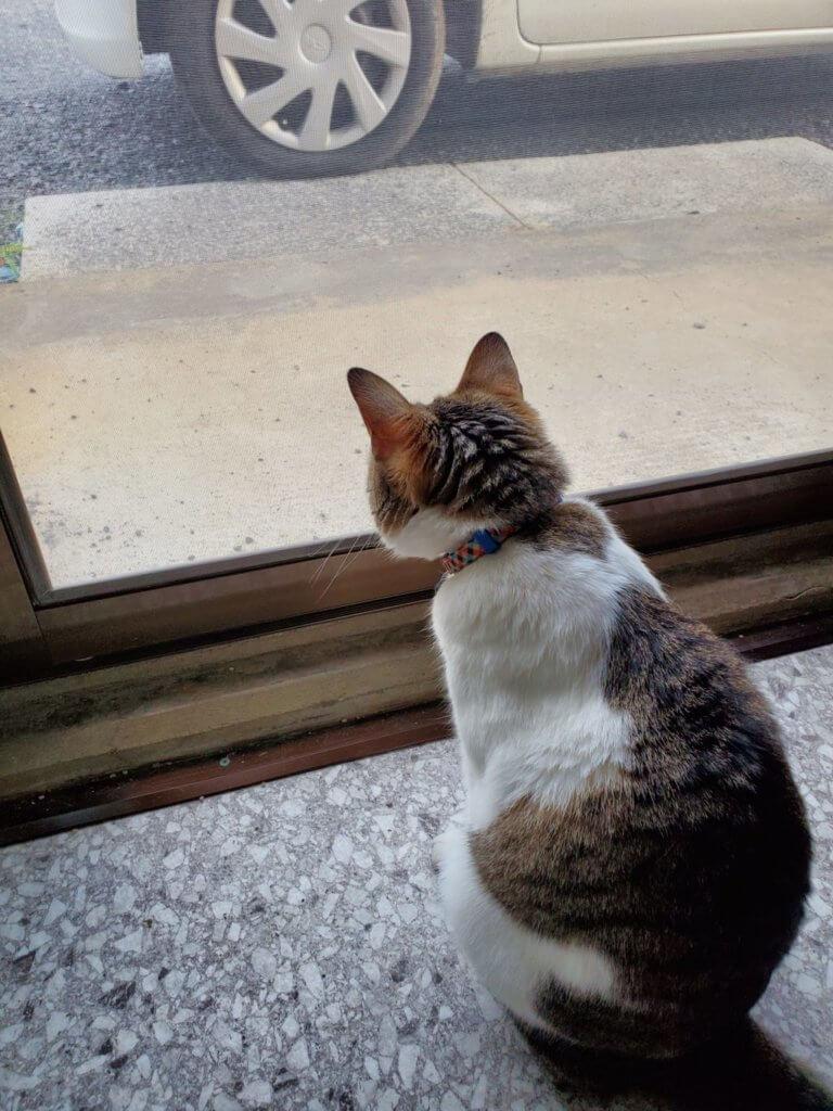猫マール32 視認性