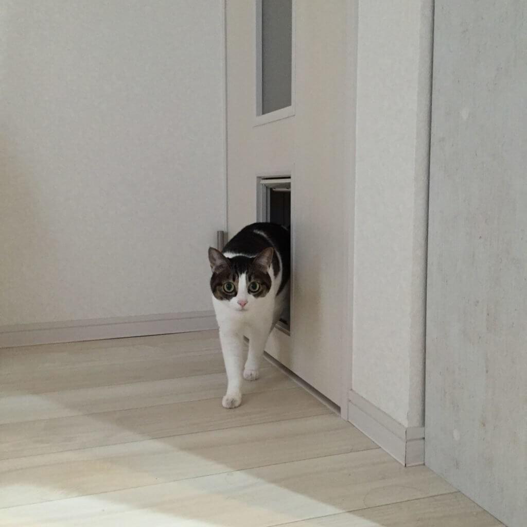 ペット用ドア 費用
